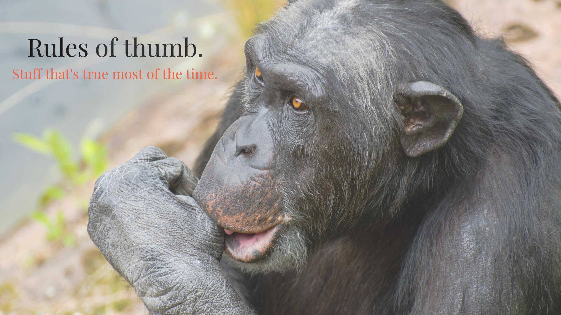 Gorilla sucking thumb